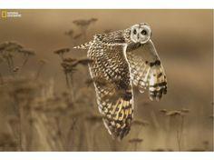 """Un regard derrière soi""   by Henrik Nilsson   Location: Boundary Bay, Canada   National Geographic 2014 Photo Contest"