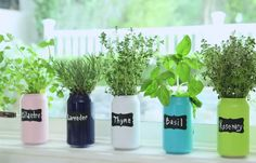 DIY Herb Garden Using Diet Coke Cans and 2 Other Ways to Upcycle or Repurpose Soda Cans