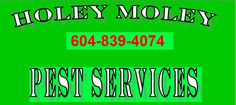 Superb #Pest #control #in #Chilliwack For more detail visit on http://bit.ly/1Qm5Tjh .