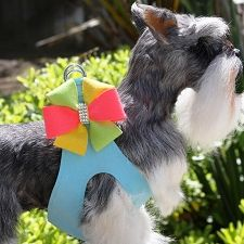 One stop shop for designer dog clothes and accessories - Susan Lanci Angela Step-In Harness - Tiffi Blue - puppy Collars, Leads & Harnesses - Harnesses; for small big dogs pets & puppies. Big Dogs, Large Dogs, Animal Design, Dog Design, Dog Steps, Designer Dog Clothes, Puppy Collars, Dog Boutique, Pet Puppy
