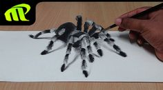 How to Draw 3D Spider - Anamorphic Illusion   Tarantula   Widow Spider Drawing   3D Spider Drawing/AMAZING realistic illusion! Check out the full drawing pro...