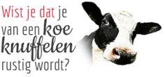 http://blog.deworkshopsite.nl/category/wist-je-datjes/