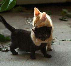 adorable kitten hug