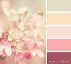 Alina Babina | FLOWERS