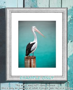 Pelican photo print  8x10 inches 20x25cm  Fine Art by oceloteyes