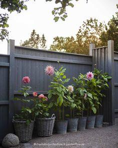 Balcony Plants, Outdoor Plants, Outdoor Gardens, Tiny Garden Ideas, Small Garden Design, Bloom And Wild, Garden Paving, Fresco, Back Gardens