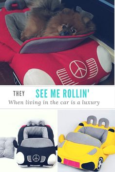 Wow your guests with this amazing Car Bed for small dogs!