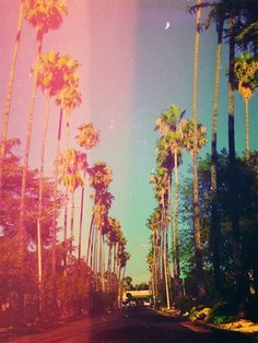Awesome filter on these palm trees!