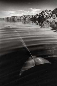 Un photographe a immortalisé des images incroyables de baleines et de dauphins…