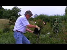 How to Plant Drift Roses - featuring Steve Hutton of ConardPyle.
