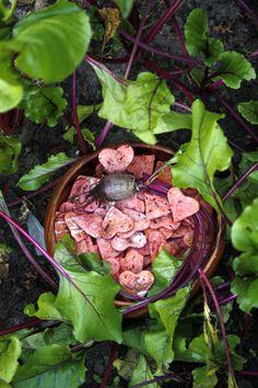 Zdrowe, ekologiczne, ręcznie robione, naturalne przysmaki dla psów. PsieSmaki - Buraklove to buraczane domowe ciastka dla psa. http://psiesmaki.blog.com