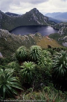 Tasmania, Southwest National Park, World Heritage Area. Beautiful World, Beautiful Places, Places Around The World, Around The Worlds, Australia Travel, Australia Photos, South Australia, World Heritage Sites, Landscape Photography
