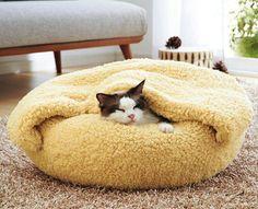 Cozy kitty.