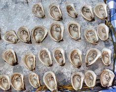 Village Bay Oysters from Rodney's Oyster House in Montecito Summer Farmers Market in Toronto, Ontario