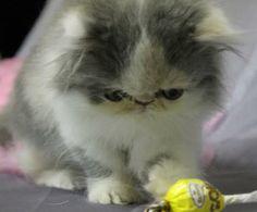Lara's kitten<3