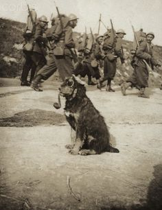World War I. A dog dressed up as a German soldier (France). In 1915.