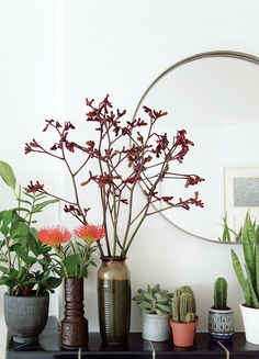 Plant Shelfie {and a new blog series} - French By Design