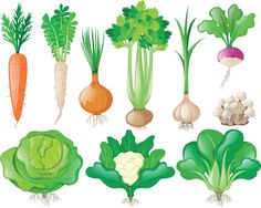 Different types of vegetables Free Vecto. Toddler Preschool, Toddler Crafts, Preschool Activities, Crafts For Kids, Kreative Jobs, Healthy Prepared Meals, Vegetable Illustration, Different Types Of Vegetables, Fruit Art