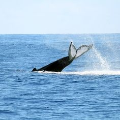 Enjoy whale watching in Bar Harbor, Maine.