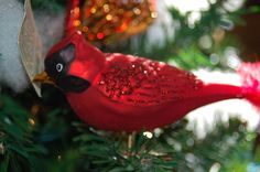 Old World Christmas Ornament - Cardinal