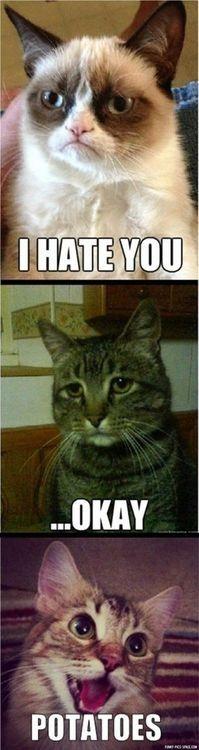 POTATOES #Amusement #Fun #Funny #cats #kittens