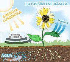 Como ensinar a Fotossíntese em sala de aula