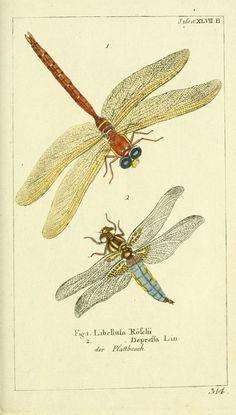 Bd 7 plates (1784) - Gemeinnüzzige Naturgeschichte des Thierreichs : - Biodiversity Heritage Library