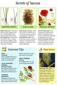 don juan climbing rose Outdoor Plants, Garden Plants, Outdoor Gardens, Indoor Outdoor, Garden Projects, Garden Ideas, Rose Garden Design, Growing Roses, Don Juan