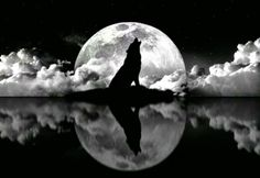 Howling At The Moon...