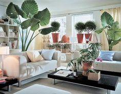 Неприхотливые комнатные растения в интерьере http://www.myflora.com.ua/index.php?option=com_content&task=view&id=862&Itemid=116