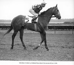 Native Dancer 1953 Horse Fly, My Horse, Horse Racing, Grey Horses, Funny Geek, Thoroughbred Horse, Racehorse, The Old Days, Horse Pictures