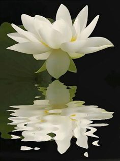 Pisces - Water lily - http://www.simplysunsigns.com/
