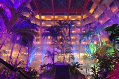 The amazing atrium at the Oasis Cancun delights visitors from all over the world!
