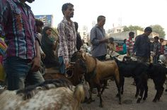 It was rush hour at Baroda Friday Market! Not of cars...but goats!