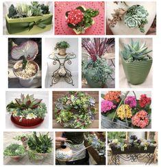 Tips from a Top Container Garden Designer