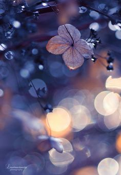 """pixiewinksfairywhispers: """" aspectofadreamer: Bokeh by *lieveheersbeestje Let your life lightly dance on the edges of Time like dew on the tip of a leaf. Bokeh Photography, Abstract Photography, Levitation Photography, Experimental Photography, Exposure Photography, Winter Photography, Photo Bokeh, Beautiful Flowers, Beautiful Pictures"""