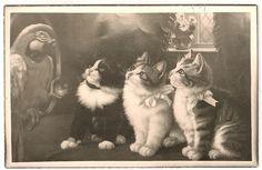 vintage kitten postcard | Flickr - Photo Sharing!