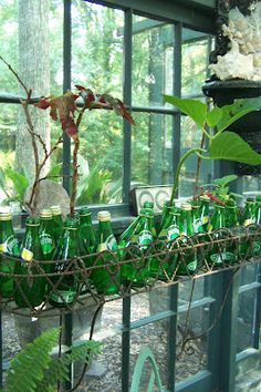 Perrier bottles perfect for rootings