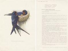 Hey, diesen tollen Etsy-Artikel fand ich bei https://www.etsy.com/de/listing/479077965/vintage-vogelbild-tierposter-zeichnung