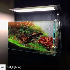 Aquarium Axolotl, Nano Aquarium, Aquarium Design, Aquarium Fish, Aquariums Super, Amazing Aquariums, Aquarium Landscape, Nature Aquarium, Planted Aquarium