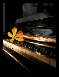 the lighting. the leaf. the piano. sigh.... photographer unknown