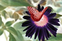butterfly on flower, surreal