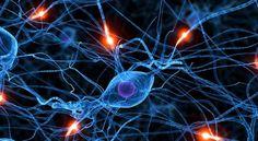 Identifican un nuevo proceso cerebral que bloquea la formación de recuerdos al despertar