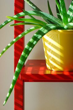 An aloe vera plant:   21 Life-Changing Health And Beauty Products You Should Try In 2016
