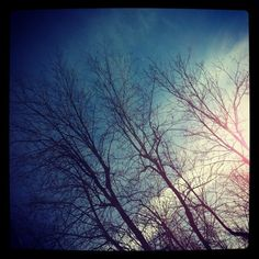 Looking up: bare trees