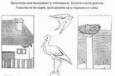 20 Cuib De Randunica De Colorat 8 Martie, Birds, Education, Bird, Onderwijs, Learning