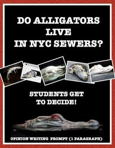 State and support your opinion. Do alligators live in New York sewers? Let students decide! This opinion writing prompt will help students form and write their opinions based on the evidence. Takes the writing process step by step with a focus on using facts and examples as support.