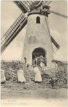 1905 sugar windmill barbados