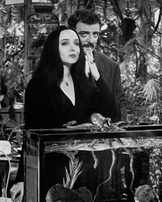 Gomez and Morticia Addams by Aristotle's fish tank The Addams Family 1964, Addams Family Tv Show, Family Values, Family Love, Family Photo, Morticia And Gomez Addams, John Astin, Charles Addams, Artists