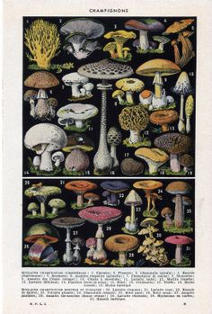 Mushrooms Vintage French Dictionary by GambettaVintageShop on Etsy, $8.00